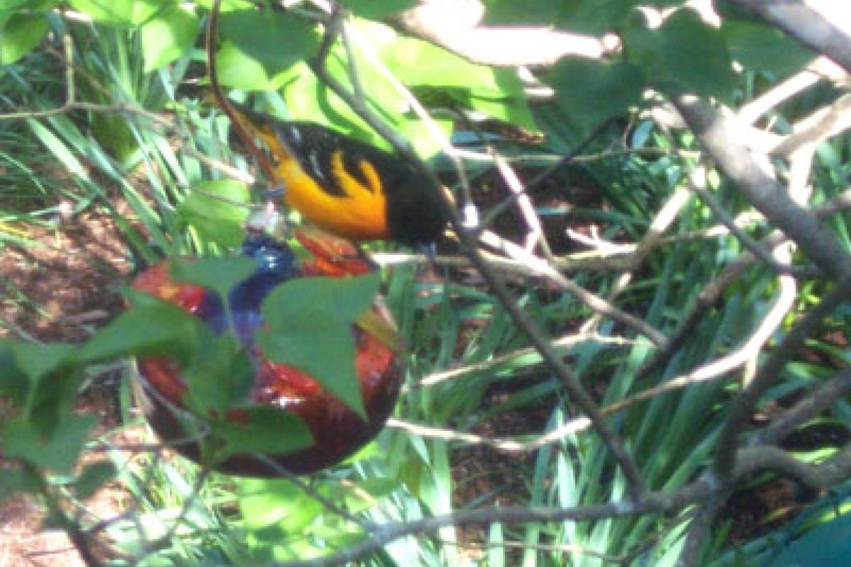 Brightly colored bird